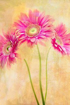 Pinks by Rebecca Cozart