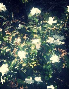 Flor II  (Jardim da Tia Rosilda)