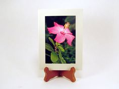 Hibiscus Flower, Blank Photo Card and Envelope, Blank Note Card, 0003PC by PhotographyByRoger on Etsy