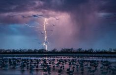 as melhores fotos de 2016 da national geographic Um raio cruza o céu durante uma tempestade no Rio Wood, no estado americano de Nebraska, enquanto cerca de 400 mil pássaros grous-canadianos estão nas redondezas.