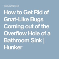 How To Get Rid Of Gnat Like Bugs Coming Out Of The Overflow Hole Of A  Bathroom Sink