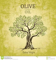 Illustration about Green stylised Olive tree Vector illustration, with olives and leaves. Illustration of green, fruit, food - 6719857 Logo Arbol, Olive Oil Packaging, Branch Vector, Tree Wall Murals, Pine Tree Tattoo, Olive Oil Bottles, Tree Images, Tree Logos, Olives