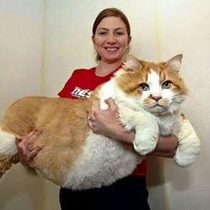 The Biggest Cat In The World