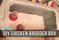 Easy DIY Chicken Brooder Box | Life In Beta