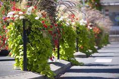 Nowe trendy w małej architekturze miejskiej Flower Boxes, Flower Containers, Flowers, Go Green, Container Gardening, Nowe Trendy, Plants, City, Decor