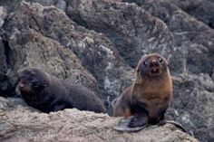 Wellington, New Zealand: The perfect starting point for day trips and tours (and baby seals!)