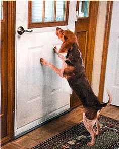 DOOR SCRATCH PROTECTOR - LARGE 35'W X 33'H => Don't get left behind, see this great cat product : Cat Doors, Steps, Nets and Perches