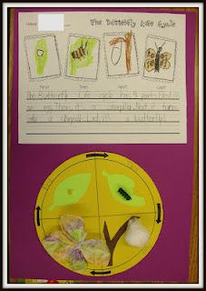 butterfly life cycle- sequencing page, corn kernel, noodle, cotton ball, marker/coffee filter/twisty tie Kindergarten Science, Elementary Science, Teaching Science, Teaching Tools, Teaching Ideas, Preschool, Student Teaching, Teaching Resources, Classroom Fun