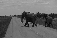 Chobe Nationalpark Botswana und Victoriafalls Zambia-3