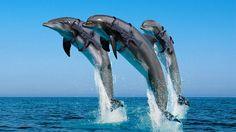 Tri-dolphin strike team