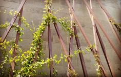 Stopped by a job to see how things are looking... Cold rolled steel is rusting! vines are climbing!  More photos later.  #hollisterdesignstudio #hollisterstudio #landscapedesign #landscapedesigner #plants #gardens #design #designlovers #droughttolerant #gardendesign #napa #sonoma #instagardeners #garden  #gardener #garden_styles #gardendesign #gardenlife #garden_explorers #gardenart #gardensofinstagram #gardenlover #gardenporn #gardentime #gardeninspiration #gardenview #gardenwalk…