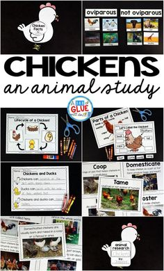 Engage your class in an exciting hands-on experience learning all about chickens! It will be the perfect addition to your spring and Easter lesson plans. This Chickens: An Animal Study is perfect for science in Preschool, Pre-K, Kindergarten, First Grade, and Second Grade classrooms and packed full of inviting science activities.  Students will learn about the difference between chickens and ducks, oviparous and non-oviparous animals, parts of a chicken, and a chicken's life cycle. When students