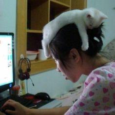 Chat Chapeaux  cat hat