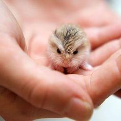 Cute Hamster | Bored Panda