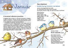 Feeding Birds In Winter, Amazing Nature, Kindergarten, Poems, Language, Science, Album, Activities, Education