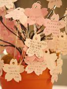 桜のメッセージ演出