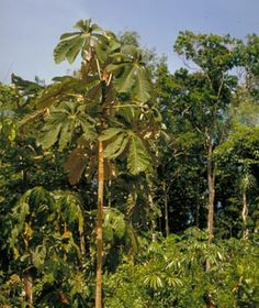 Infoblad regenwoudplanten