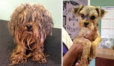These abandoned dogs were given a new lease on life and it is amazing how they were transformed. #Dogs #AbandonedDogs