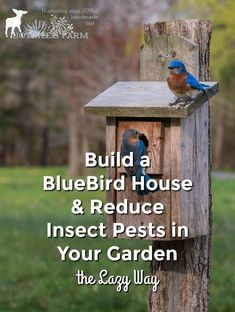 Homemade bluebird houses invite blue birds and swallows to your yard, increasing the songbird population and helping to reduce garden pests. This article will show you how to make a birdhouse box from one board. Homemade Bird Houses, Bird Houses Diy, Bird House Feeder, Bird Feeders, Bluebird House Plans, Bluebird Houses, Traditional Birdhouses, Do It Yourself Furniture, Bird House Kits