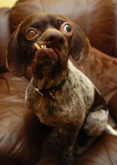 Britain S Ugliest Dog