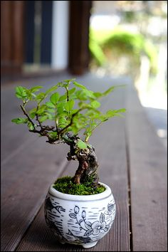 Bonsai 野ばら盆栽..I really want one on my bed stand