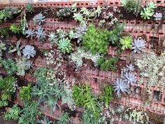 Vertical Succulent wall 5 months after planting. It is really filling in nicely. I look at it everyday-not sure why it gives me such a peaceful feeling!