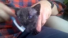 Bruce the cat #Youtube #Brucethecat #Kitten www.brucethecat.co.nz