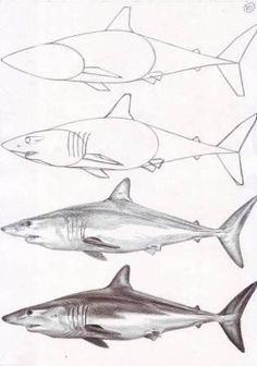 Exciting Learn To Draw Animals Ideas. Exquisite Learn To Draw Animals Ideas. Animal Sketches, Animal Drawings, Drawing Sketches, Art Drawings, Shark Drawing, Shark Art, Ocean Art, Fish Art, Step By Step Drawing