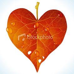 Heart shaped autumnal leaf.
