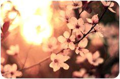 Bom dia Sábado,   Bom dia Sol! *-*