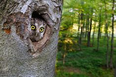 ...what. #owls #saywhatowls #birds #saywhat