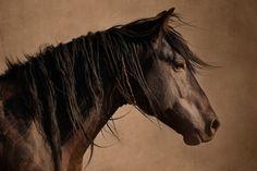 Mustang Pride - Wild Horse: By Debra Little