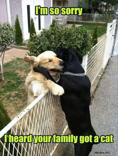 Funny Picture Of Two Dogs Hugging
