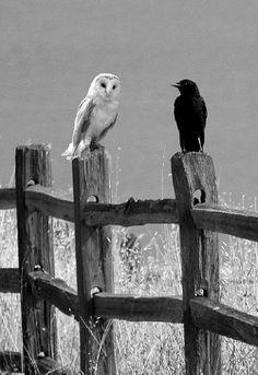 sharing secrets...