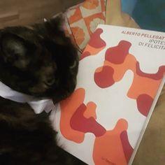 gatto gatta gatti poesia, ipotesi di felicità, cat cats poetry