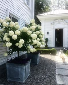 hydrangea garden care 48 Fresh And Beautiful Front Yard Landscaping Ideas Front House Landscaping, Landscaping With Rocks, Farmhouse Landscaping, Backyard Landscaping, Hydrangea Landscaping, Backyard Ideas, Landscaping Borders, Front Yard Patio, Porch