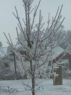 2009 ice storm in Springdale Arkansas
