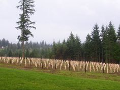 Wineries in Portland