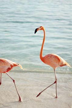 Walk like a flamingo