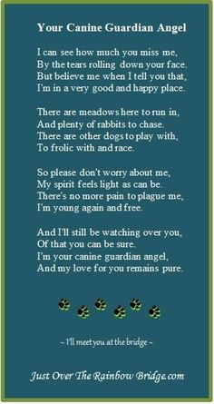 "💙💙 miss you Harley 💙💙 Your Canine Guardian Angel - . Designed to promote healing & provide comfort, our site includes a visitor's area built around the sentiment ""I wish Rainbow Bridge had visiting hours. Yorkshire Terrier, Boston Terrier, I Love Dogs, Puppy Love, Pet Poems, Pet Loss Grief, Dog Loss Poem, Pet Remembrance, Yorky"