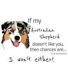 If my Australian Shepherd......