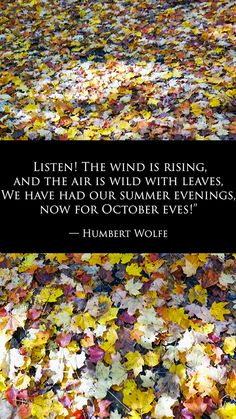 """""""Listen! The wind is rising, and the air is wild with leaves, We have had our summer evenings, now for October eves!"""" - Humbert Wolfe"""
