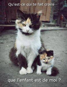 """Résultat de recherche d'images pour """"image drole de chat avec texte"""""""