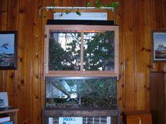 Chinese Water Dragon Cages | water cage cages chinese i Amphibians, Reptiles, Chinese Water Dragon, Reptile Habitat, Reptile Enclosure, Vivarium, Aquascaping, Aquariums, Terrarium