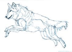 drawing   A Wolf A Day