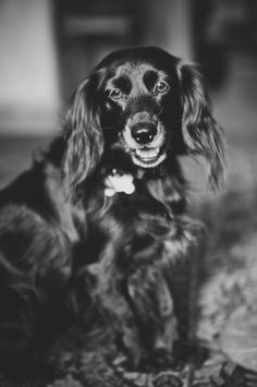 Bindi, the dog.  © Marta Mandryto