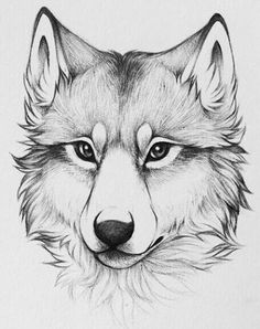 Drawing sketches · beautiful drawings · loup pour tatouage drawings of wolves, dog drawings, cute drawings, cute animal drawings Easy Pencil Drawings, Cool Art Drawings, Art Drawings Sketches, Sketch Art, Drawing Ideas, Drawing Tips, Wolf Drawing Easy, Animal Pencil Drawings, Wolf Sketch Easy
