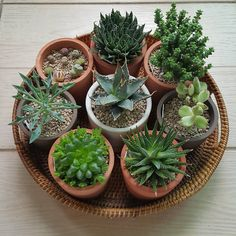 """1,292 Likes, 14 Comments - Youngmi (@yymplantlover) on Instagram: """"""""Succulent Saturday"""" ☘ (Top to clockwise ) .Aloe aristata .Cressula rupestris .Cotyledon…"""""""