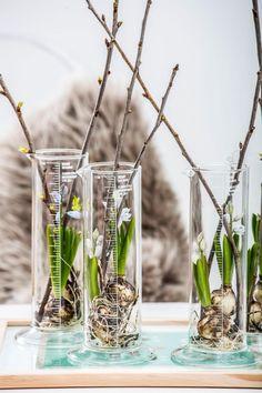 Auch wenn es draußen noch eisig kalt ist, auf blühende Pflanzen im Zimmer müssen Sie nicht verzichten. Holen Sie sich mit unseren Ideen den bunten Frühling schon jetzt ins Haus! #zwiebelblumen #frühling