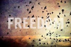FREEDOM #FNetSCENTSATIONAL